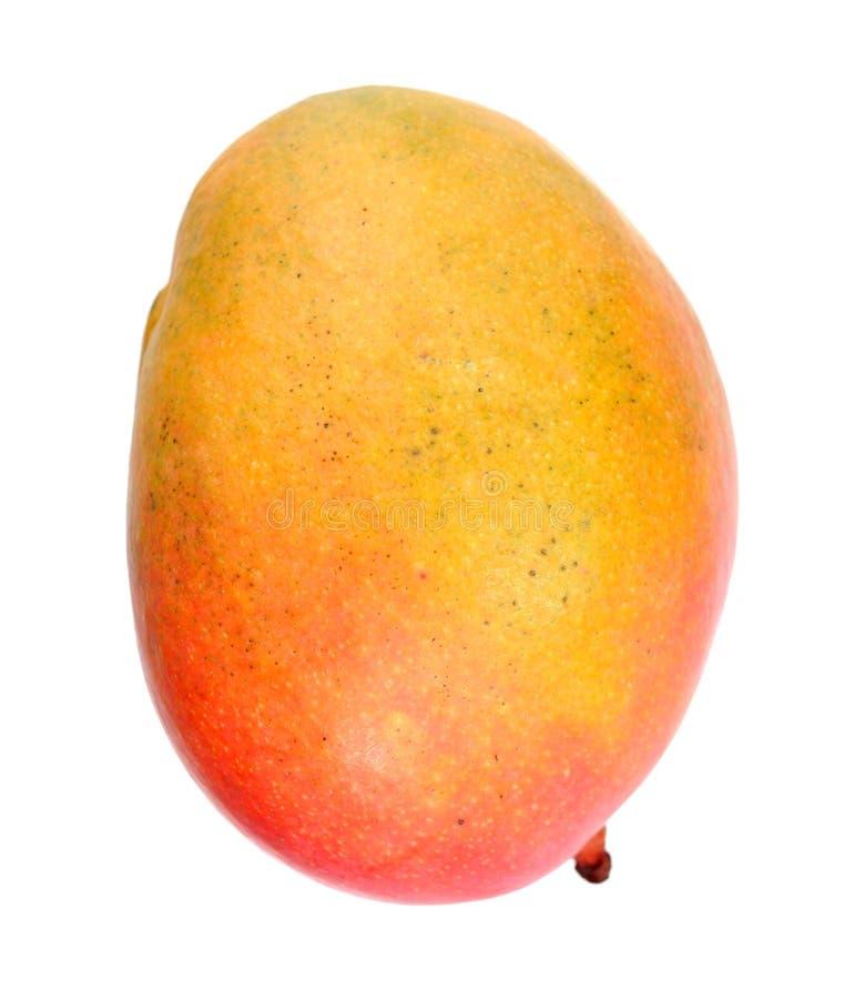 Söt enkel mango fotografering för bildbyråer