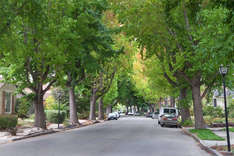 Söt eukalyptusträd fodrad bostads- gata i sommar royaltyfria bilder