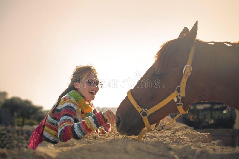 Söt häst royaltyfri fotografi
