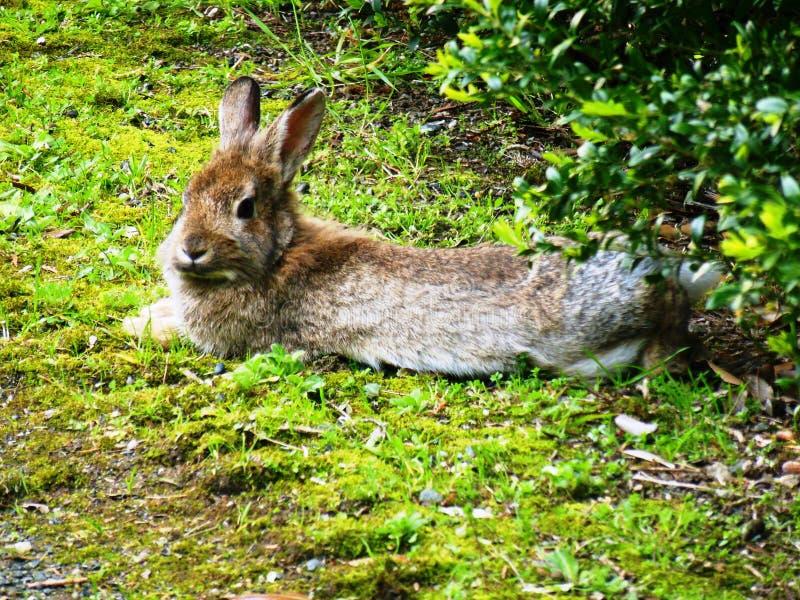 söt kanin royaltyfri bild