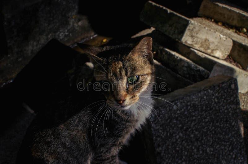 Söt katt i mörker fotografering för bildbyråer