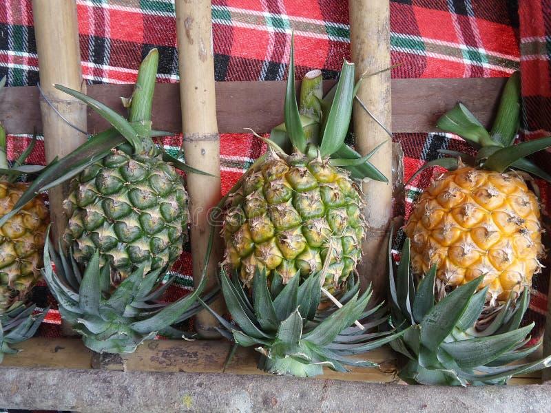 Söt och ny ananas royaltyfria foton