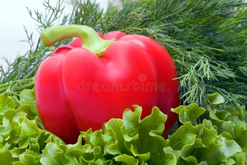 söt red för peppar för klockadillgrönsallat royaltyfria foton