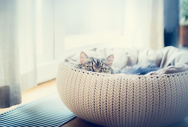 Söt rolig katt i kattkorg över fönsterbakgrund Katten som ser rov- på kameran arkivbild