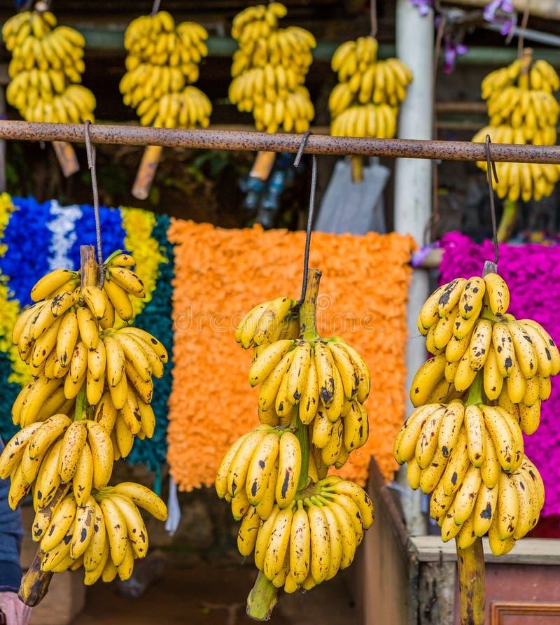 Söta bananer sålde på gatan på en ställning nära Rio de Janeiro royaltyfria foton