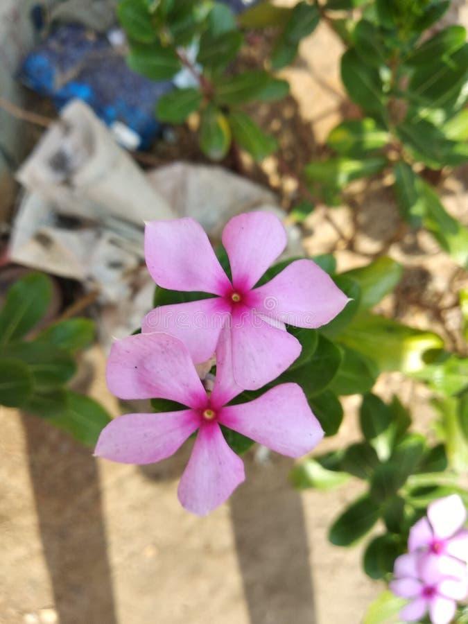 Söta blommor med färgglad bakgrund arkivbild