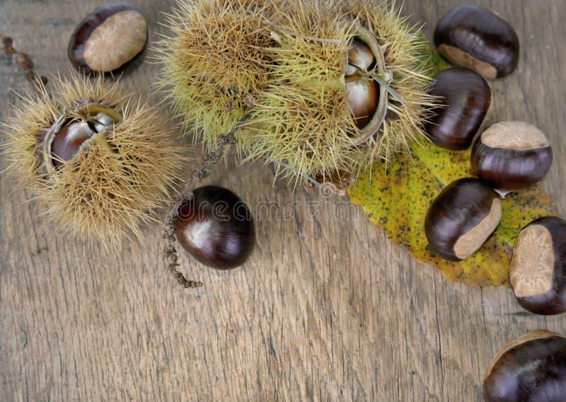 Söta chesnuts och skal på en planka royaltyfria foton