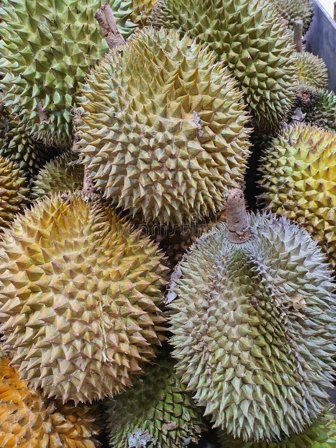 Söta duriska frukter från Palembang Indonesia royaltyfri bild