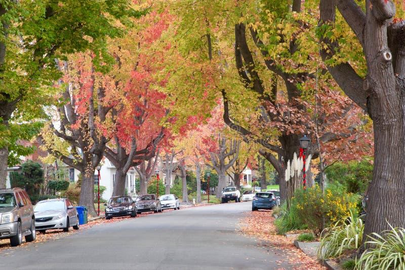 Söta eukalyptusträd för stads- skog royaltyfri fotografi