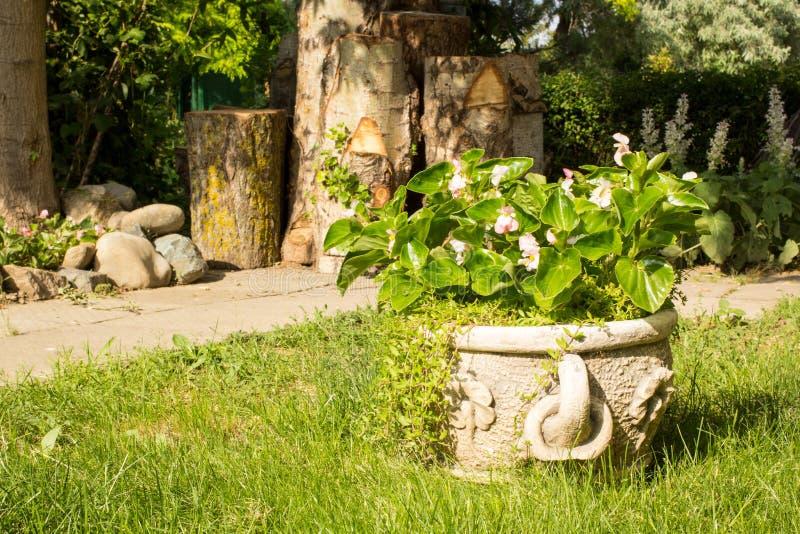 Söta inlagda blommor på trädgård royaltyfri fotografi