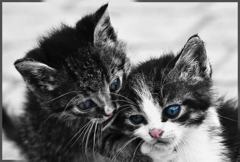 Söta kattungar arkivbilder