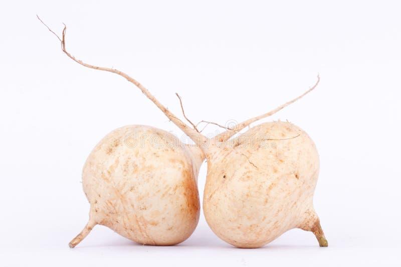 Sötpotatisbönan (Jicama) är lökformig rotfruktfrukt på den vita bakgrunden royaltyfri fotografi