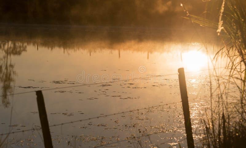 Sötvattens- damm på gryning 03 royaltyfria foton