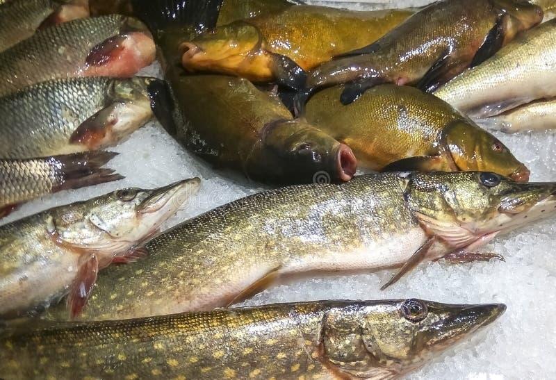 Sötvattensfiskmarknad, Europa, EC arkivfoto