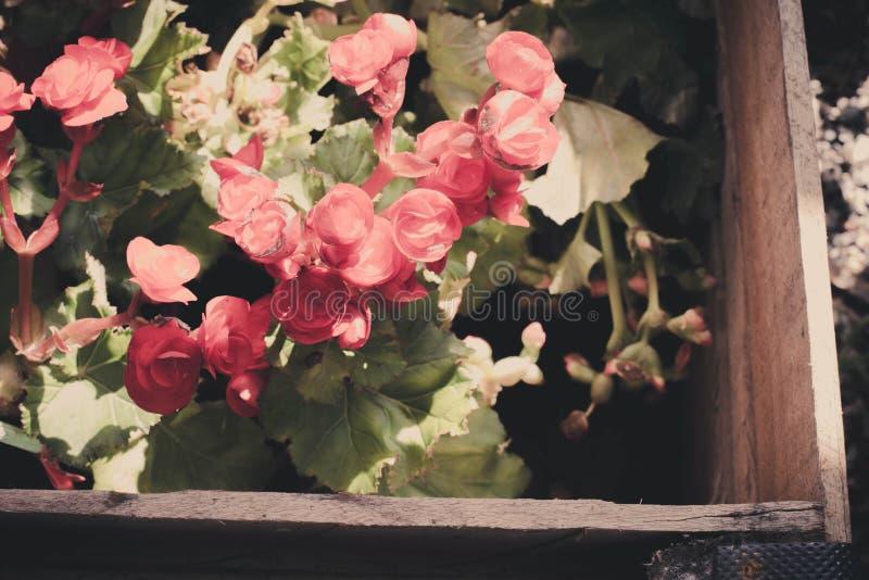 Süße Blumenunschärfe gemacht mit Farbfiltern stockfoto