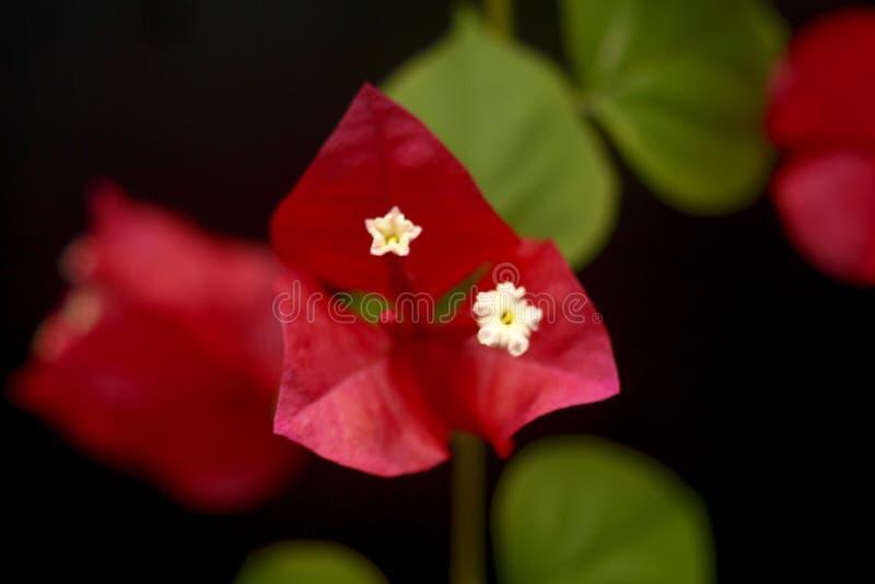 Süße Frühlingsblume stockfotografie