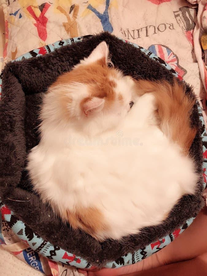 Süße Katze lizenzfreie stockfotografie