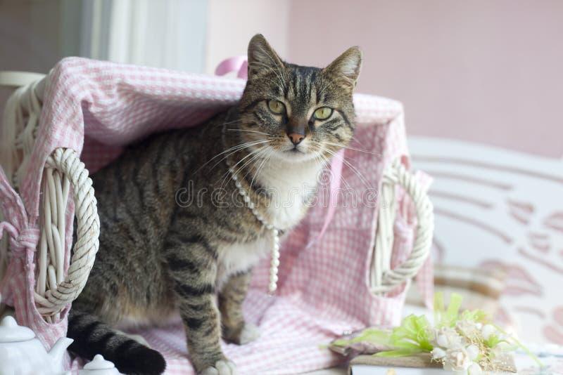 Süße Katze lizenzfreies stockfoto