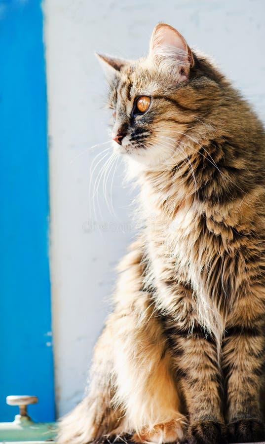 S??e Katze, sehr spielerisch, mit gelben Augen stockbilder