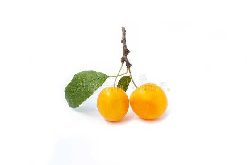 Süße kleine gelbe Pflaumen lizenzfreie stockfotografie