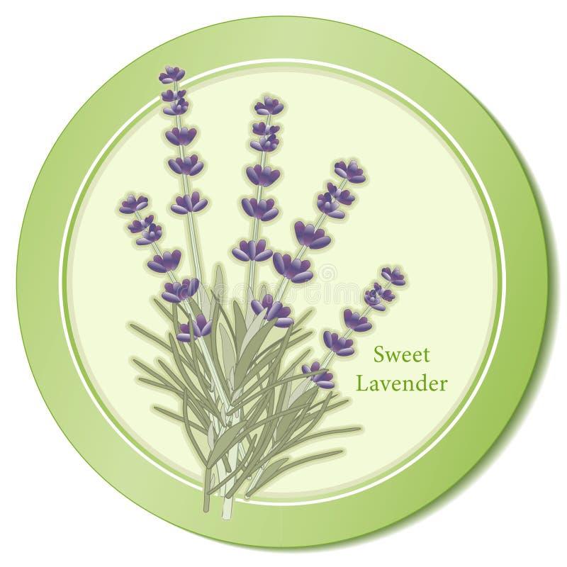 Süße Lavendel-Kraut-Ikone stock abbildung