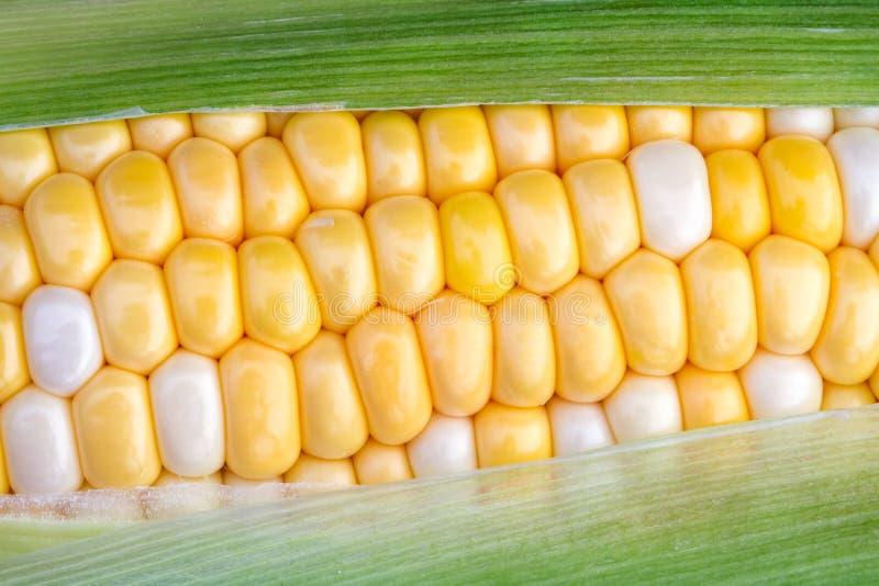 Süße Maiskörner stockfoto