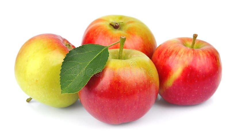 Süßer Apfel mit Blättern lizenzfreies stockfoto
