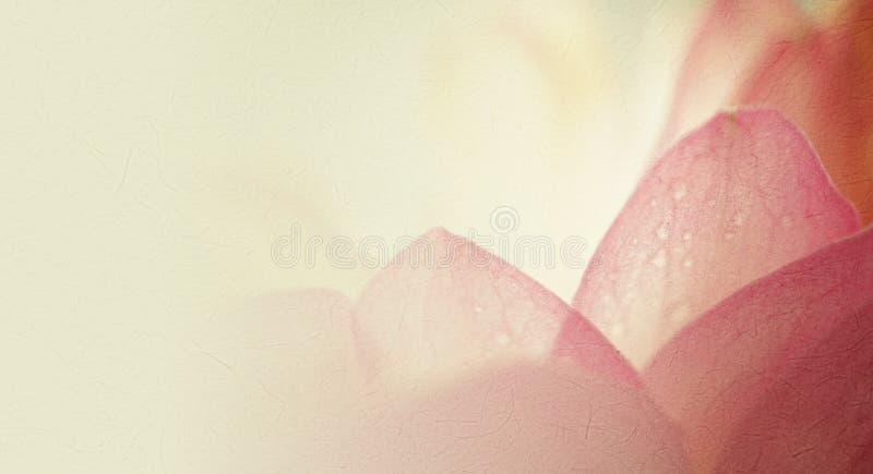 Süßer Farblotos in der weichen Farb- und Unschärfeart auf Maulbeere tapezieren Beschaffenheit lizenzfreie stockbilder