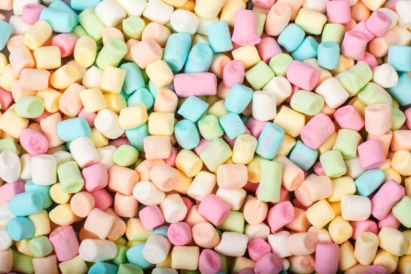 Süßer geschmackvoller farbiger Eibisch Mini auf Weiß lizenzfreie stockfotografie
