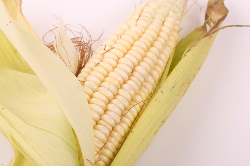 Süßer Mais stockfoto