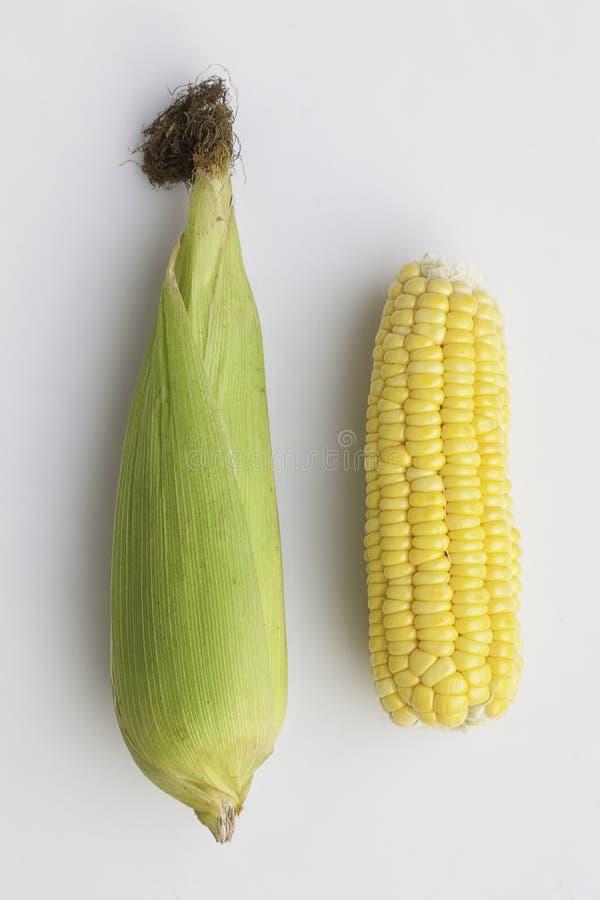 Süßer Maiskolben stockbild
