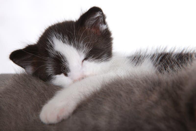 Süßes Kätzchen auf dem weißen Hintergrund, der entzückend schaut lizenzfreies stockfoto