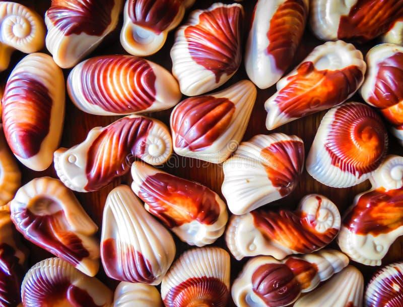 Süßes Meeresflora und -fauna auf dem Tisch stockfoto