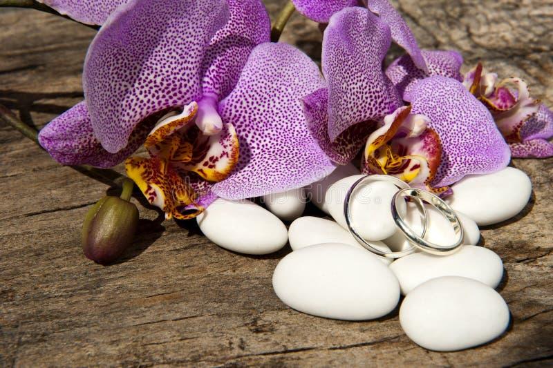Süßigkeit, Hochzeitsringe und Orchidee lizenzfreie stockfotografie