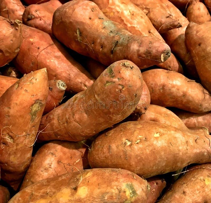 Süßkartoffel, große Vielfalt, Fallernte, Danksagung lizenzfreie stockfotografie