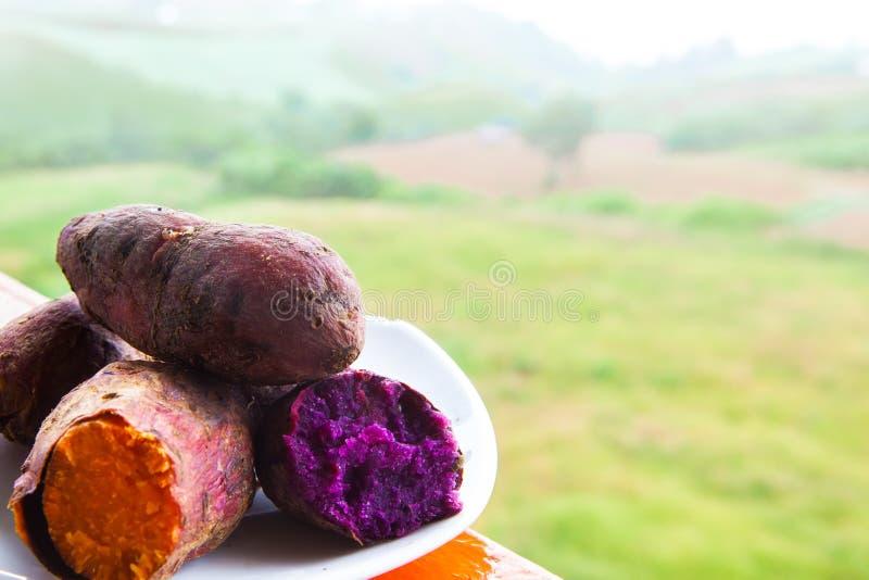 Süßkartoffeln gekocht stockfotografie