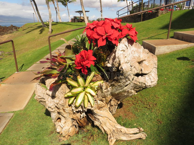 Süd-Kihei, Maui-Weihnachten 2014 stockfotografie