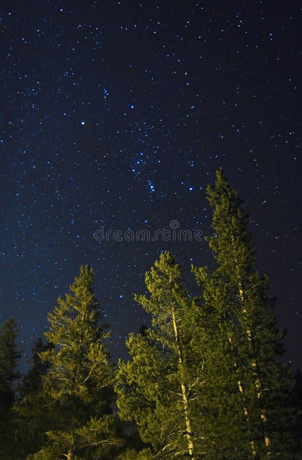 Süd-Starfield über lodgepole Kiefern lizenzfreie stockfotos