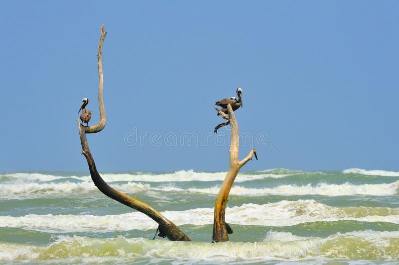 Süd-Texas Seascape lizenzfreies stockbild