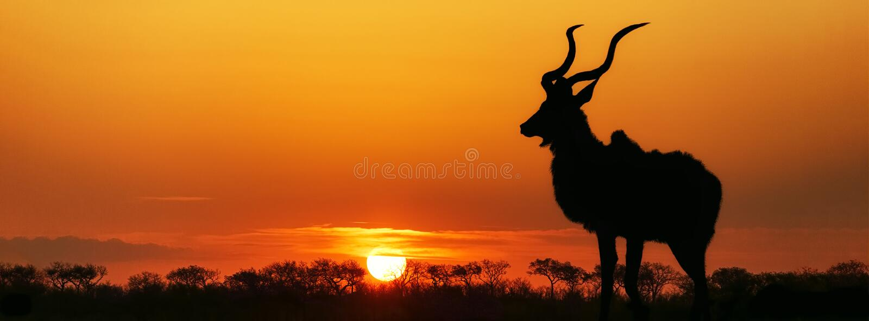 Südafrika-Sonnenuntergang Kudu-Schattenbild lizenzfreie stockfotografie
