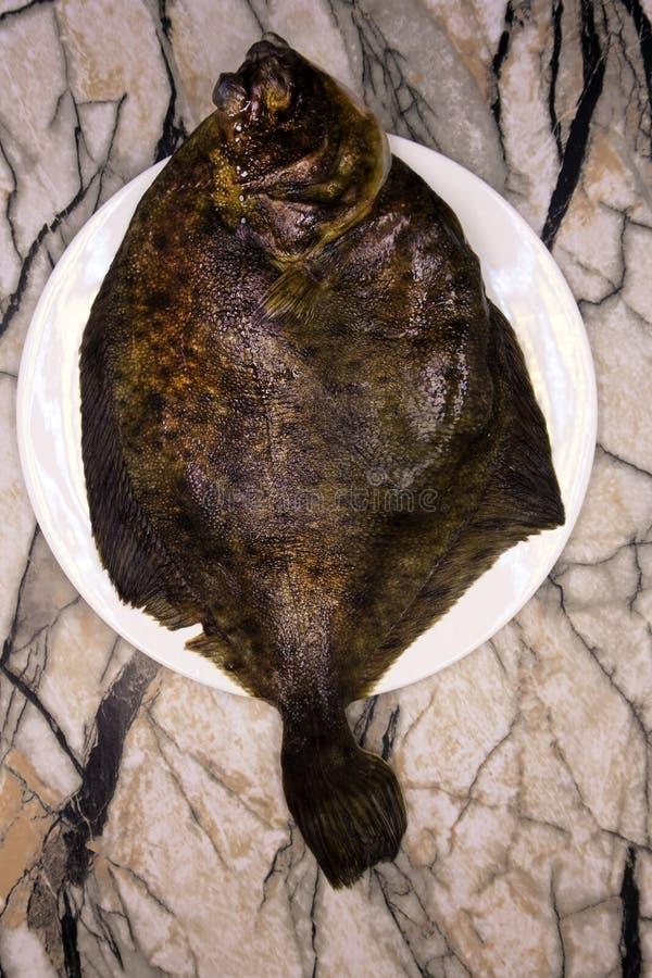 Südliche Scholle Paralichthys lethostigma Link-äugige Scholle, herauf Seite Auf weißem Hintergrund stockfotos