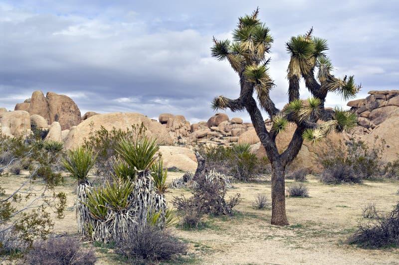 Südwestliche USA-Wüstenszene lizenzfreie stockbilder