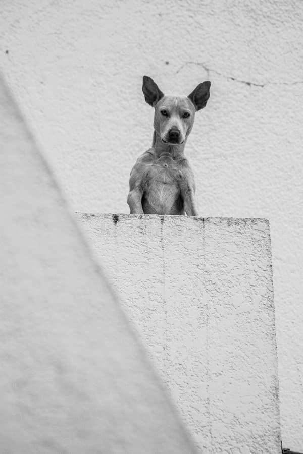 Sąsiedni pies zdjęcia stock