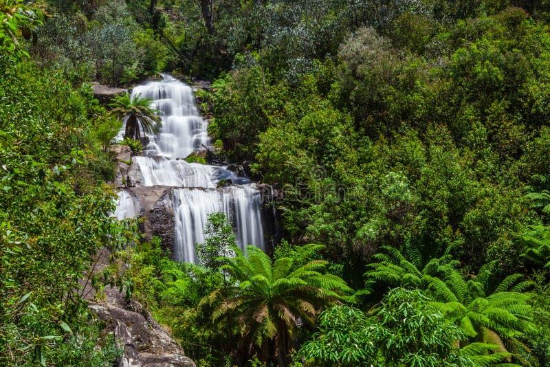 Słabo spadki w rodzimej Australijskiej Lasowej Kiewa dolinie, Wiktoria, Australia obrazy royalty free