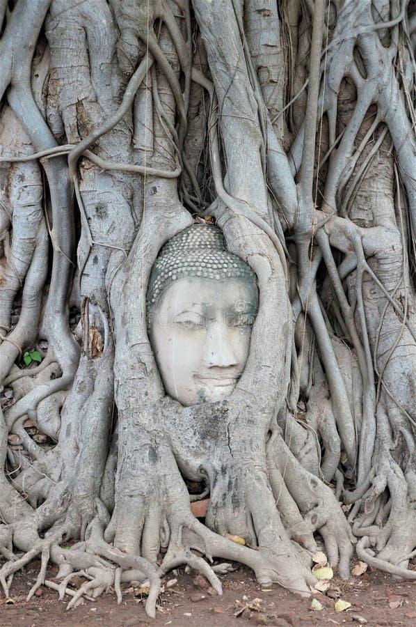 Sławna Buddha głowa, Ayutthaya, Tajlandia zdjęcia royalty free