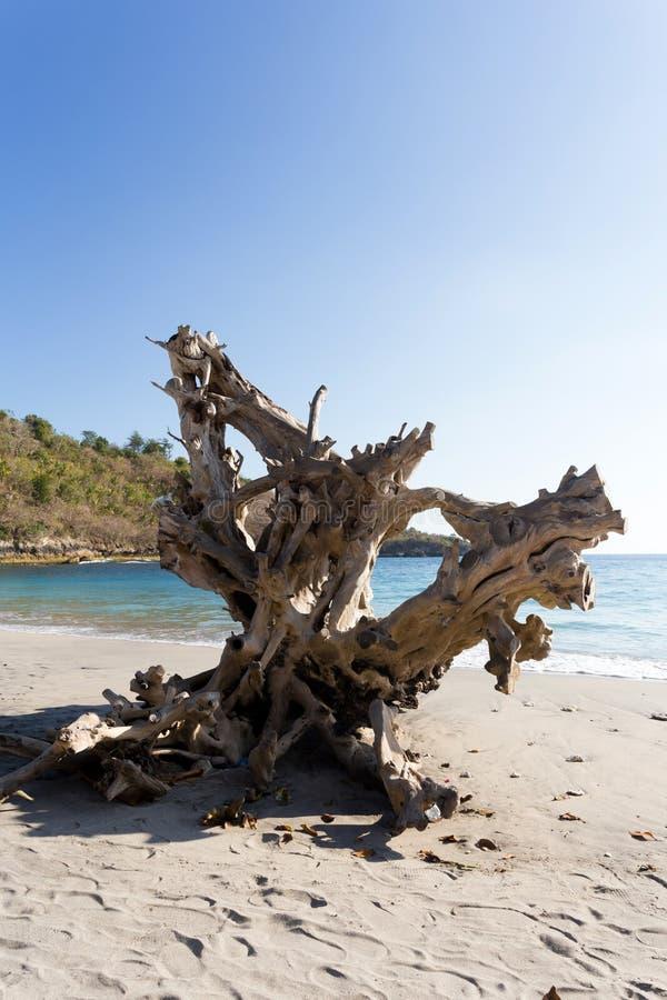 Sławna kryształ plaża przy Nusa Penida wyspą obrazy royalty free