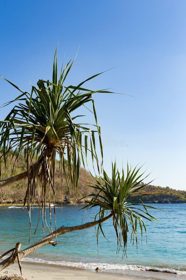 Sławna kryształ plaża przy Nusa Penida wyspą obraz stock