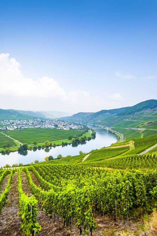 Sławna Moselle krętość z winnicami zdjęcia stock