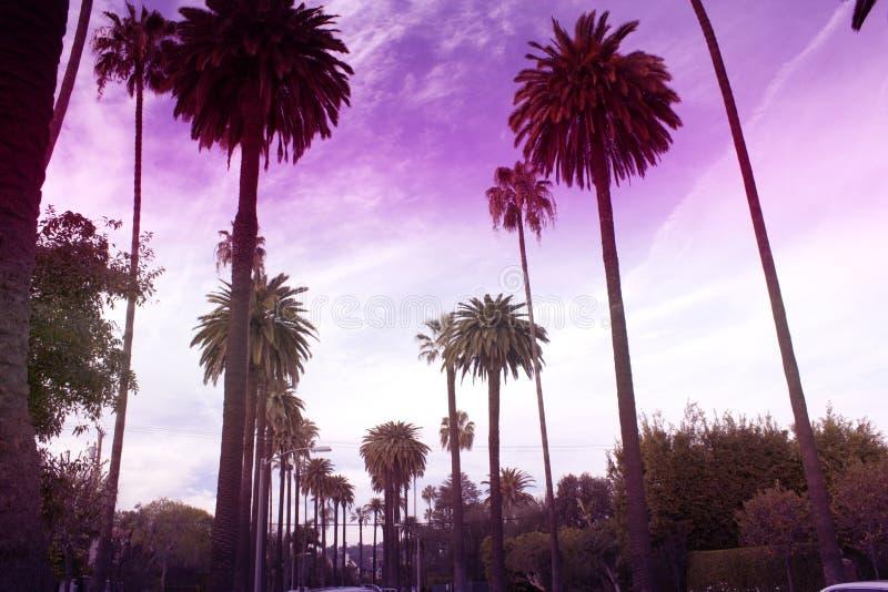 Sławne palmy Beverly Hills w Los Angeles tonowali monochrom u obraz royalty free