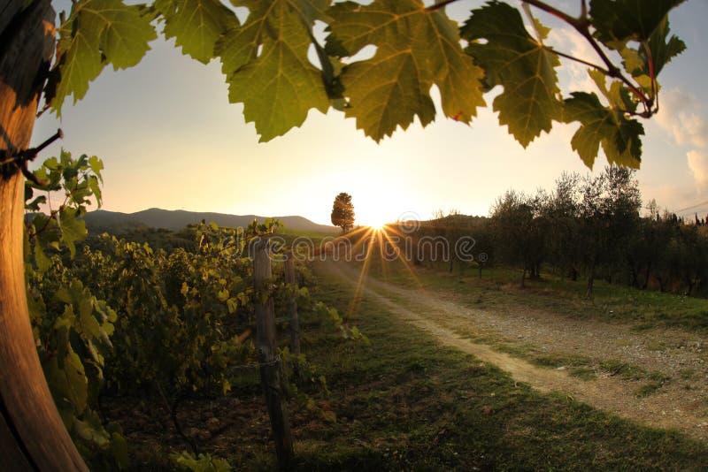 Sławni Tuscany winnicy w Włochy zdjęcia royalty free